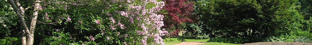 flowered path banner