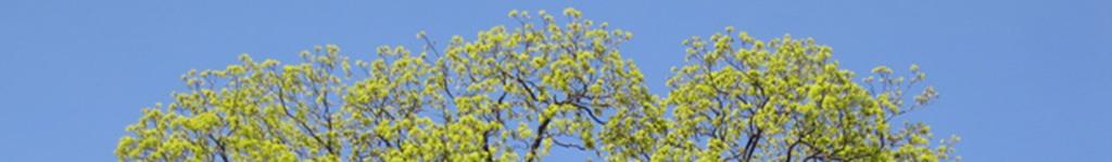 tree top banner